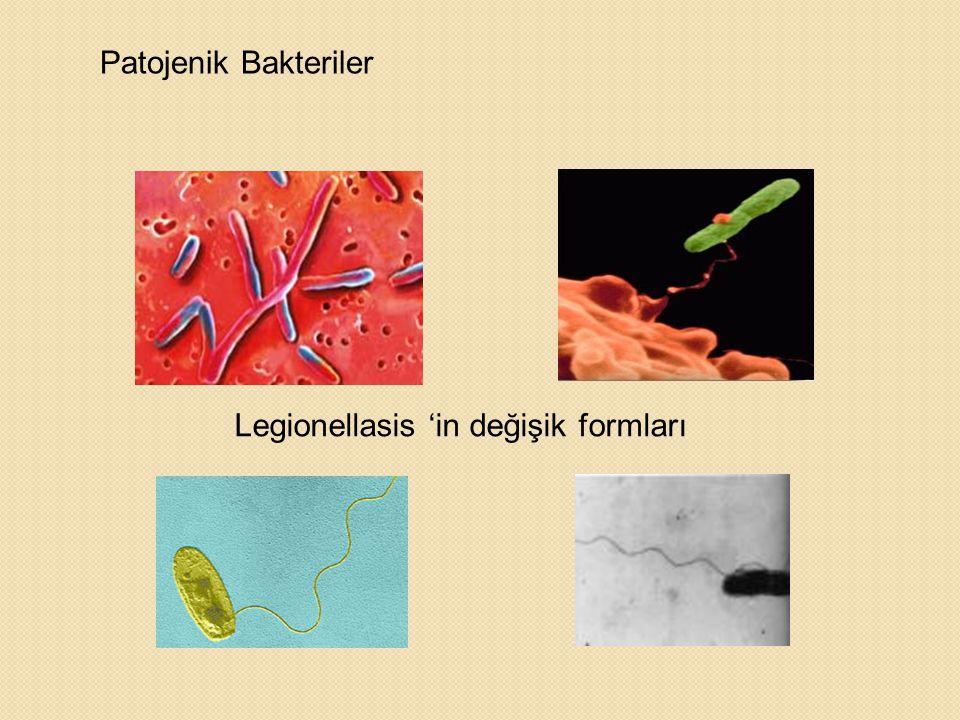 Legionellasis 'in değişik formları Patojenik Bakteriler