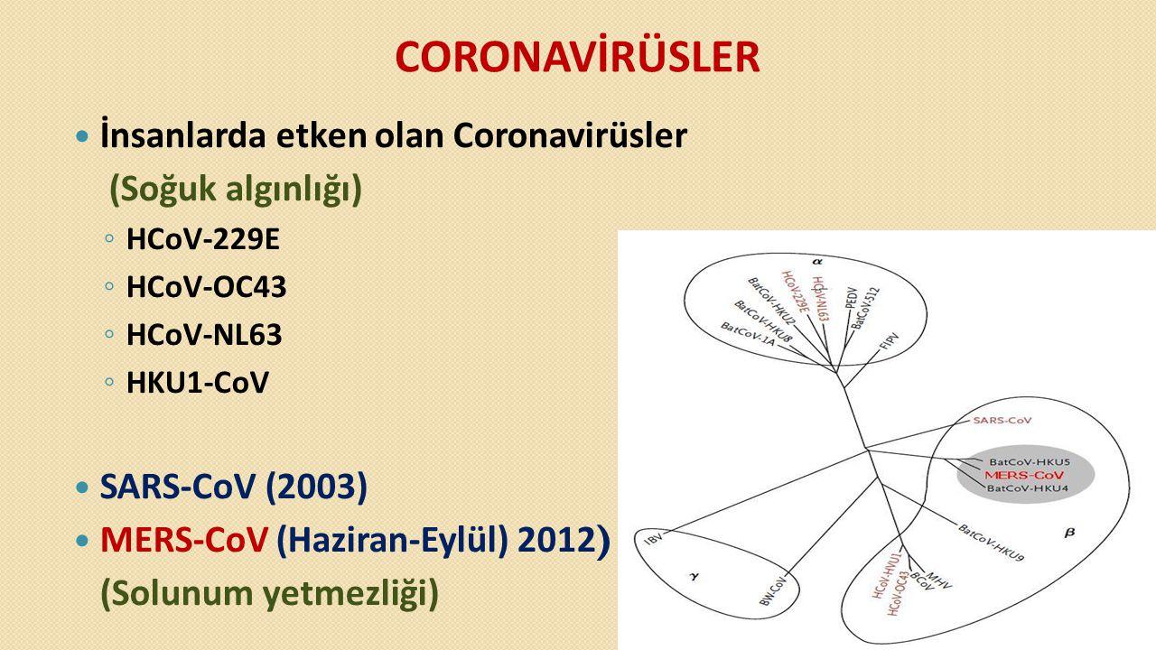 CORONAVİRÜSLER  İnsanlarda etken olan Coronavirüsler (Soğuk algınlığı) ◦ HCoV-229E ◦ HCoV-OC43 ◦ HCoV-NL63 ◦ HKU1-CoV  SARS-CoV (2003)  MERS-CoV (H