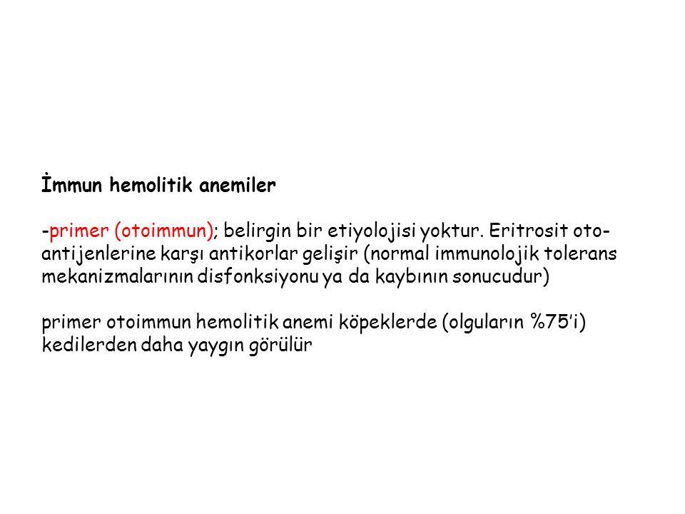 İmmun hemolitik anemiler -primer (otoimmun); belirgin bir etiyolojisi yoktur. Eritrosit oto- antijenlerine karşı antikorlar gelişir (normal immunoloji