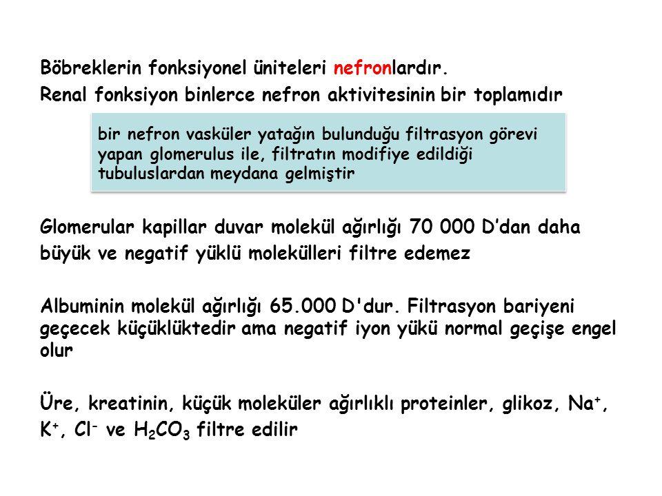 Böbreklerin fonksiyonel üniteleri nefronlardır. Renal fonksiyon binlerce nefron aktivitesinin bir toplamıdır Glomerular kapillar duvar molekül ağırlığ