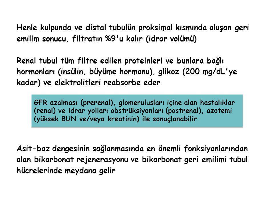 Henle kulpunda ve distal tubulün proksimal kısmında oluşan geri emilim sonucu, filtratın %9'u kalır (idrar volümü) Renal tubul tüm filtre edilen prote
