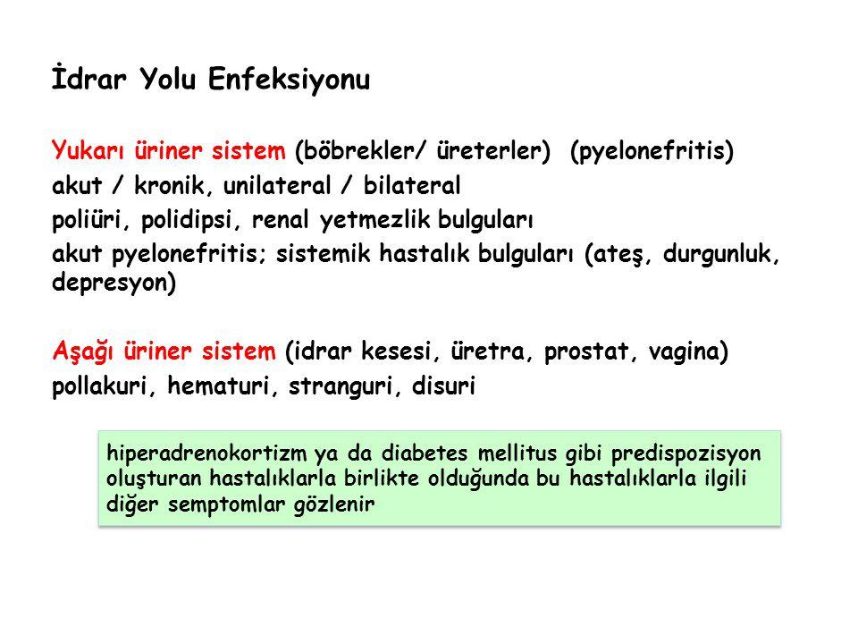 İdrar Yolu Enfeksiyonu Yukarı üriner sistem (böbrekler/ üreterler) (pyelonefritis) akut / kronik, unilateral / bilateral poliüri, polidipsi, renal yet