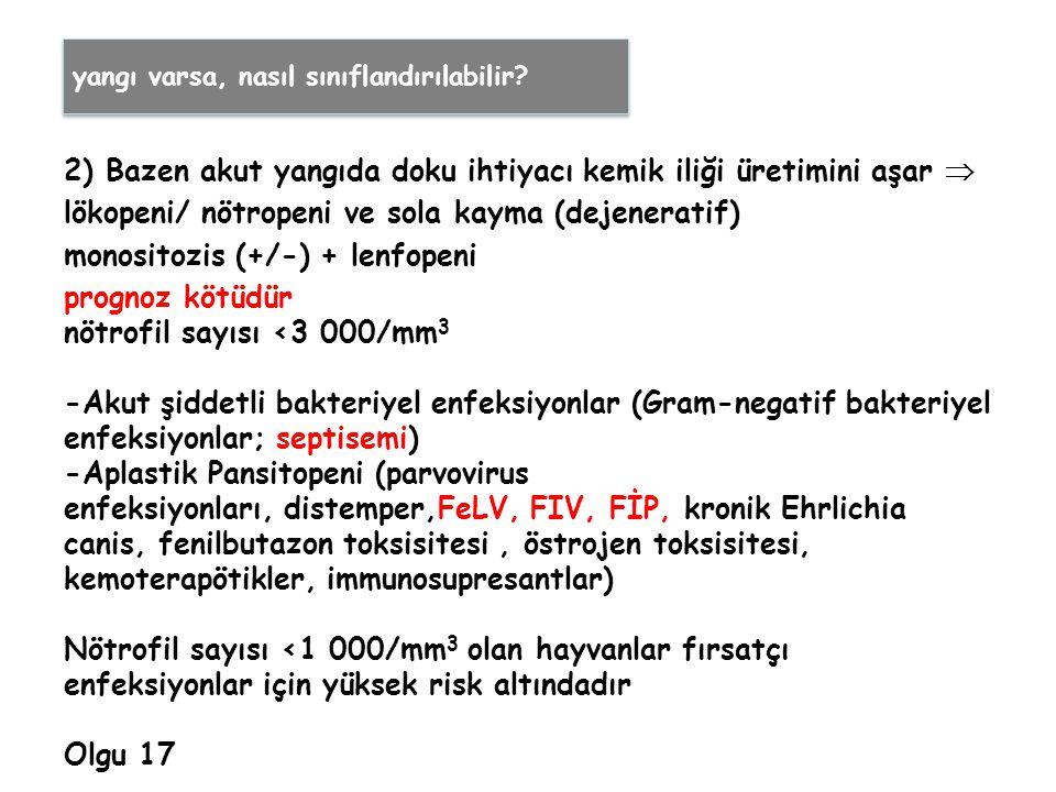 2) Bazen akut yangıda doku ihtiyacı kemik iliği üretimini aşar  lökopeni/ nötropeni ve sola kayma (dejeneratif) monositozis (+/-) + lenfopeni prognoz kötüdür nötrofil sayısı <3 000/mm 3 -Akut şiddetli bakteriyel enfeksiyonlar (Gram-negatif bakteriyel enfeksiyonlar; septisemi) -Aplastik Pansitopeni (parvovirus enfeksiyonları, distemper,FeLV, FIV, FİP, kronik Ehrlichia canis, fenilbutazon toksisitesi, östrojen toksisitesi, kemoterapötikler, immunosupresantlar) Nötrofil sayısı <1 000/mm 3 olan hayvanlar fırsatçı enfeksiyonlar için yüksek risk altındadır Olgu 17 yangı varsa, nasıl sınıflandırılabilir?