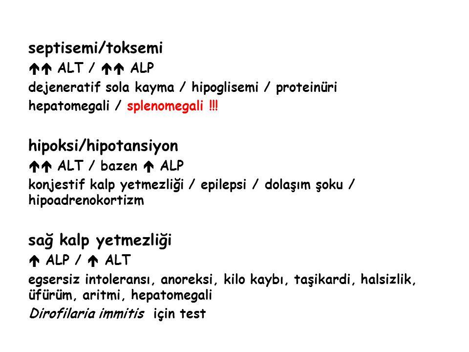 septisemi/toksemi  ALT /  ALP dejeneratif sola kayma / hipoglisemi / proteinüri hepatomegali / splenomegali !!! hipoksi/hipotansiyon  ALT / baze