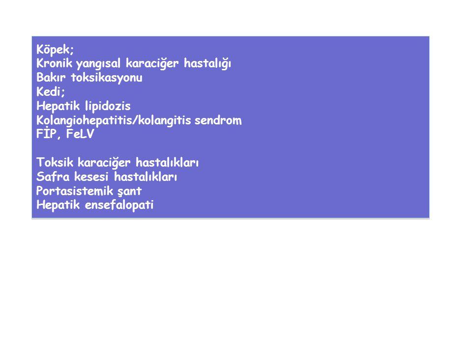 Köpek; Kronik yangısal karaciğer hastalığı Bakır toksikasyonu Kedi; Hepatik lipidozis Kolangiohepatitis/kolangitis sendrom FİP, FeLV Toksik karaciğer hastalıkları Safra kesesi hastalıkları Portasistemik şant Hepatik ensefalopati Köpek; Kronik yangısal karaciğer hastalığı Bakır toksikasyonu Kedi; Hepatik lipidozis Kolangiohepatitis/kolangitis sendrom FİP, FeLV Toksik karaciğer hastalıkları Safra kesesi hastalıkları Portasistemik şant Hepatik ensefalopati