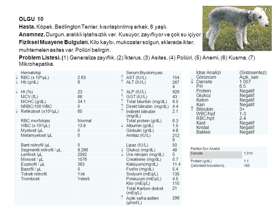 OLGU 10 Hasta. Köpek, Bedlington Terrier, kısırlaştırılmış erkek, 6 yaşlı. Anamnez. Durgun, aralıklı iştahsızlık var. Kusuyor, zayıflıyor ve çok su iç