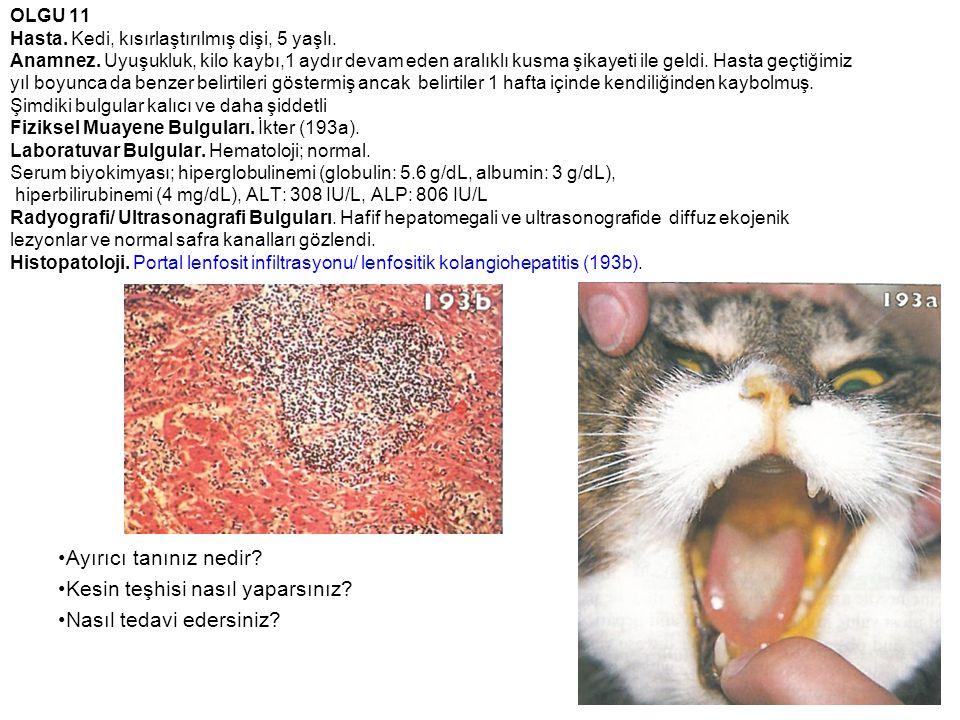 OLGU 11 Hasta. Kedi, kısırlaştırılmış dişi, 5 yaşlı. Anamnez. Uyuşukluk, kilo kaybı,1 aydır devam eden aralıklı kusma şikayeti ile geldi. Hasta geçtiğ
