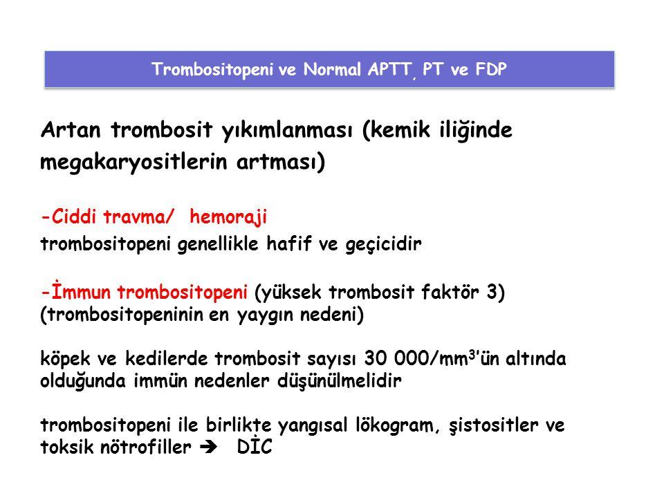 Artan trombosit yıkımlanması (kemik iliğinde megakaryositlerin artması) -Ciddi travma/ hemoraji trombositopeni genellikle hafif ve geçicidir -İmmun tr