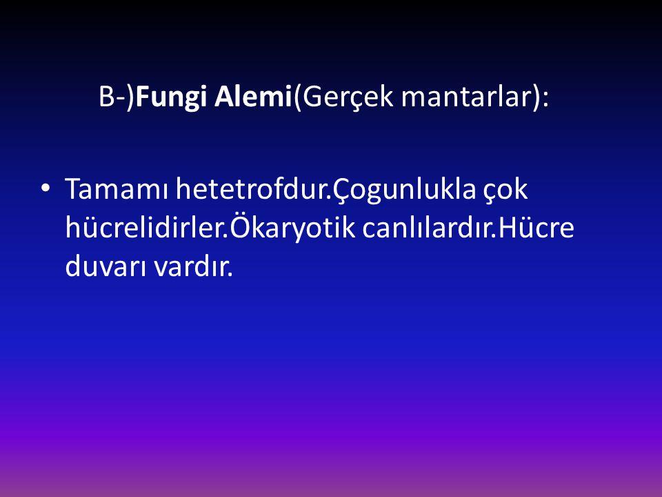 B-)Fungi Alemi(Gerçek mantarlar): • Tamamı hetetrofdur.Çogunlukla çok hücrelidirler.Ökaryotik canlılardır.Hücre duvarı vardır.
