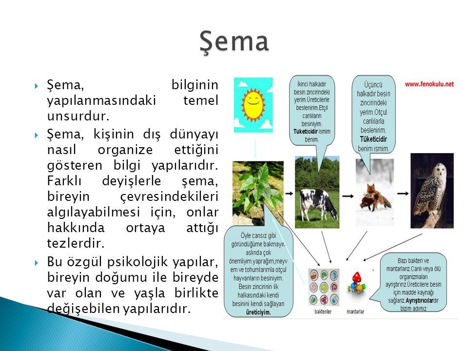  Şema, bilginin yapılanmasındaki temel unsurdur.  Şema, kişinin dış dünyayı nasıl organize ettiğini gösteren bilgi yapılarıdır. Farklı deyişlerle şe