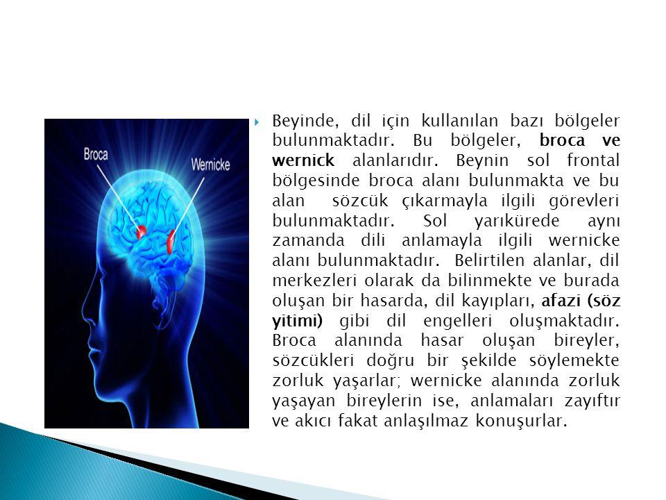  Beyinde, dil için kullanılan bazı bölgeler bulunmaktadır. Bu bölgeler, broca ve wernick alanlarıdır. Beynin sol frontal bölgesinde broca alanı bulun