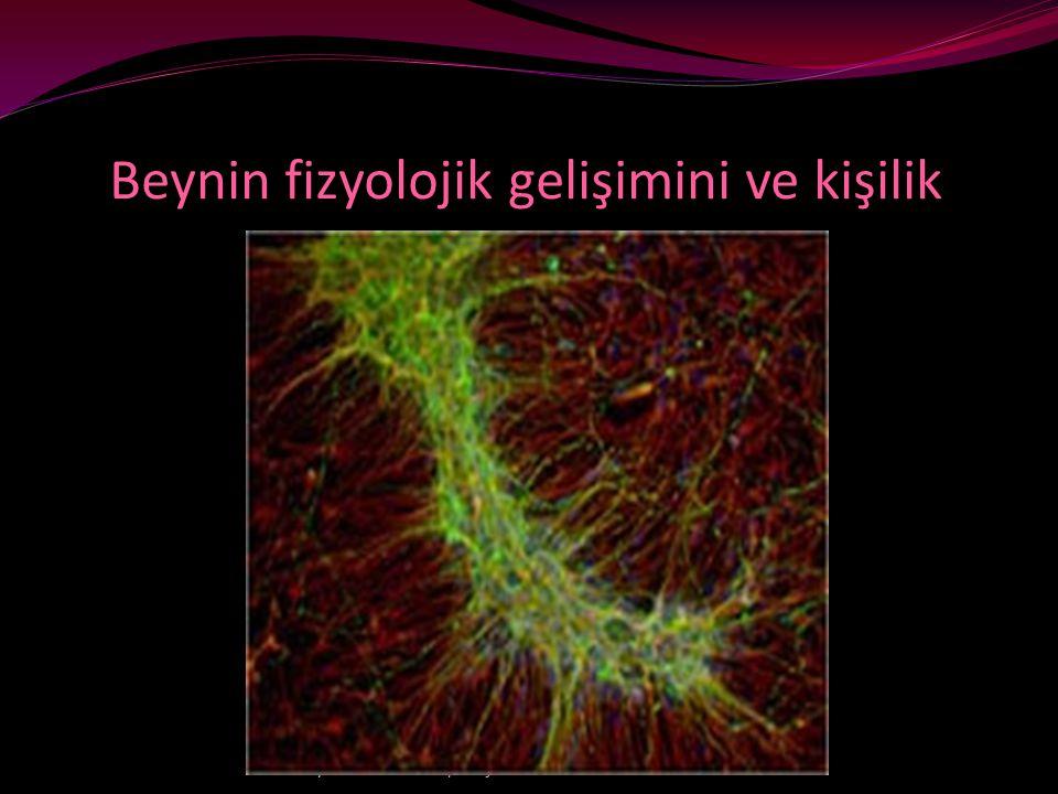 Beynin fizyolojik gelişimini ve kişilik • yıldız dilek ertürk/iletişim semineri