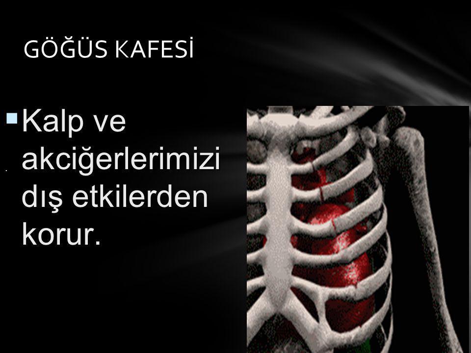 GÖĞÜS KAFESİ.  Kalp ve akciğerlerimizi dış etkilerden korur.