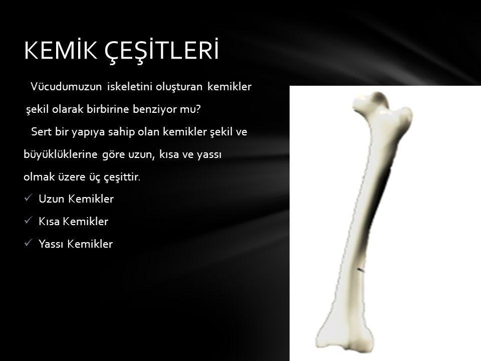 Vücudumuzun iskeletini oluşturan kemikler şekil olarak birbirine benziyor mu? Sert bir yapıya sahip olan kemikler şekil ve büyüklüklerine göre uzun, k