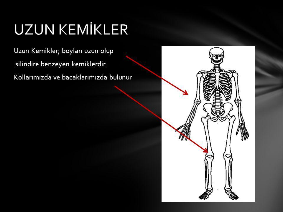 Uzun Kemikler; boyları uzun olup silindire benzeyen kemiklerdir. Kollarımızda ve bacaklarımızda bulunur UZUN KEMİKLER