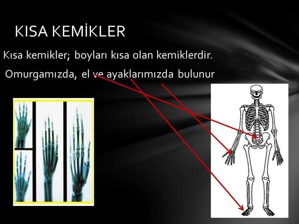 Kısa kemikler; boyları kısa olan kemiklerdir. Omurgamızda, el ve ayaklarımızda bulunur KISA KEMİKLER