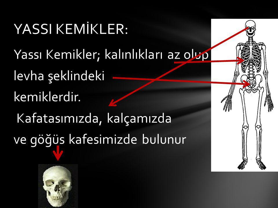 YASSI KEMİKLER: Yassı Kemikler; kalınlıkları az olup levha şeklindeki kemiklerdir. Kafatasımızda, kalçamızda ve göğüs kafesimizde bulunur