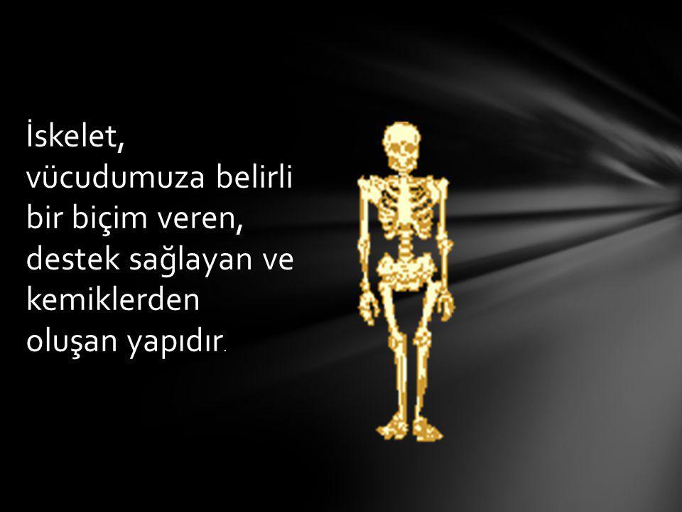 Vücudunuzda toplam 206 tane kemik var.