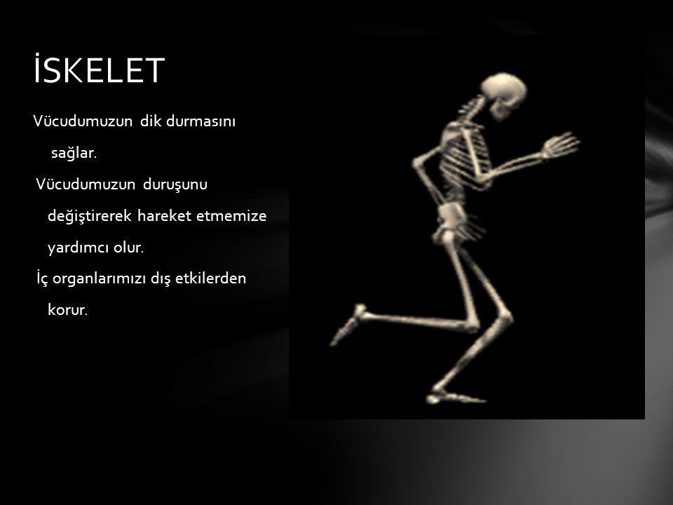 1-OYNAMAZ EKLEMLER: Kemikler birbiri ile kaynaşmıştır.