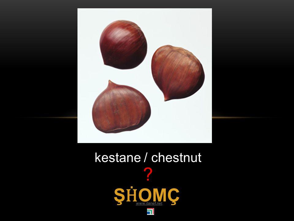 Ḣ IRŚE şeftali / peach