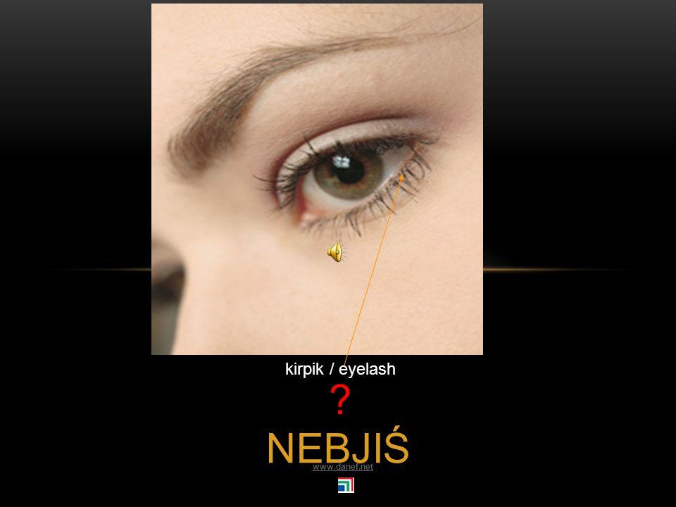 NE göz / eye