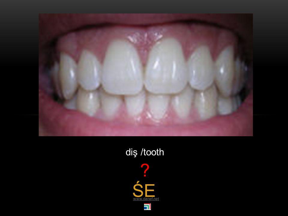 TKIN gırtlak / larynx