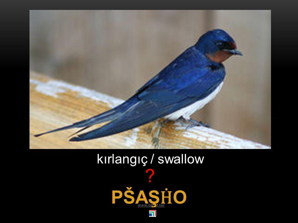 P Ḣ EŞHAĆE BZIW serçe / house sparrow