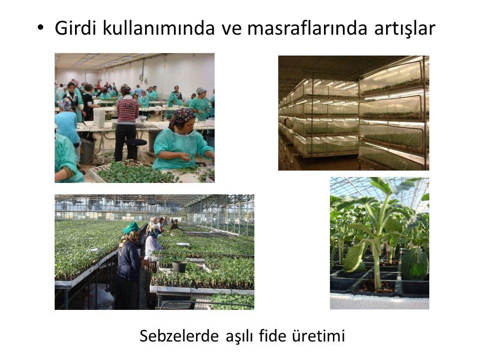 Sebzelerde aşılı fide üretimi • Girdi kullanımında ve masraflarında artışlar