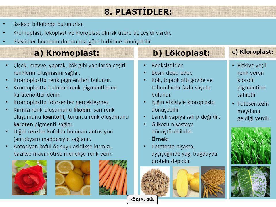 • Sadece bitkilerde bulunurlar.• Kromoplast, lökoplast ve kloroplast olmak üzere üç çeşidi vardır.