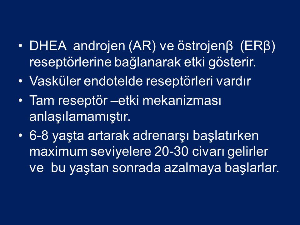 •DHEA androjen (AR) ve östrojenβ (ERβ) reseptörlerine bağlanarak etki gösterir.
