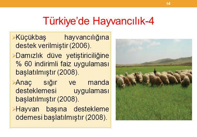 Türkiye'de Hayvancılık-4  Küçükbaş hayvancılığına destek verilmiştir (2006).  Damızlık düve yetiştiriciliğine % 60 indirimli faiz uygulaması başlatı
