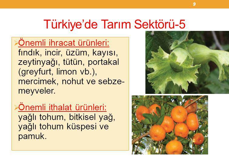 Türkiye'de Tarım Sektörü-5  Önemli ihracat ürünleri: fındık, incir, üzüm, kayısı, zeytinyağı, tütün, portakal (greyfurt, limon vb.), mercimek, nohut ve sebze- meyveler.