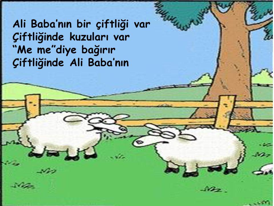 """Ali Baba'nın bir çiftliği var Çiftliğinde kuzuları var """"Me me""""diye bağırır Çiftliğinde Ali Baba'nın"""