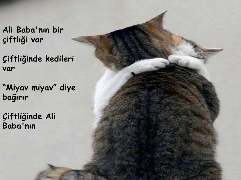 """Ali Baba'nın bir çiftliği var Çiftliğinde kedileri var """"Miyav miyav"""" diye bağırır Çiftliğinde Ali Baba'nın"""