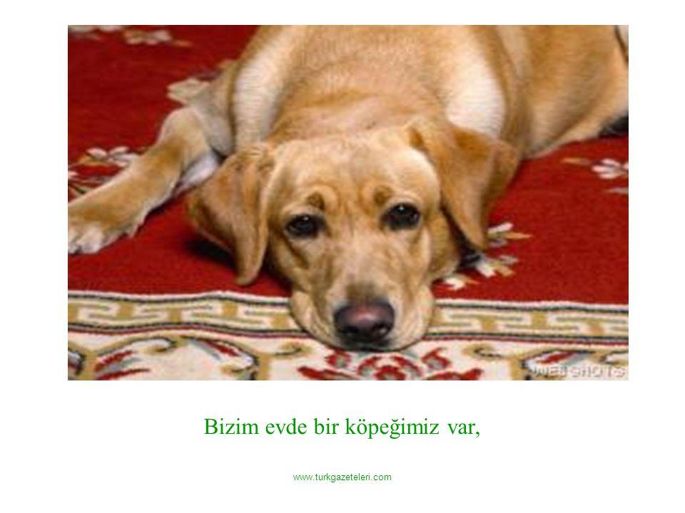 www.turkgazeteleri.com Bizim evde bir köpeğimiz var,
