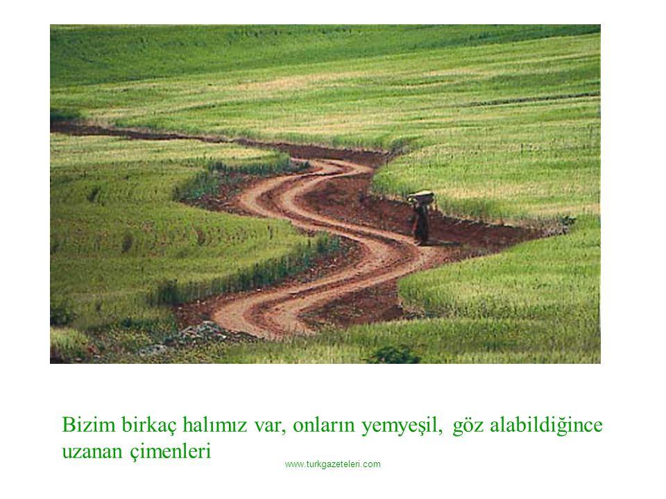www.turkgazeteleri.com Bizim birkaç halımız var, onların yemyeşil, göz alabildiğince uzanan çimenleri