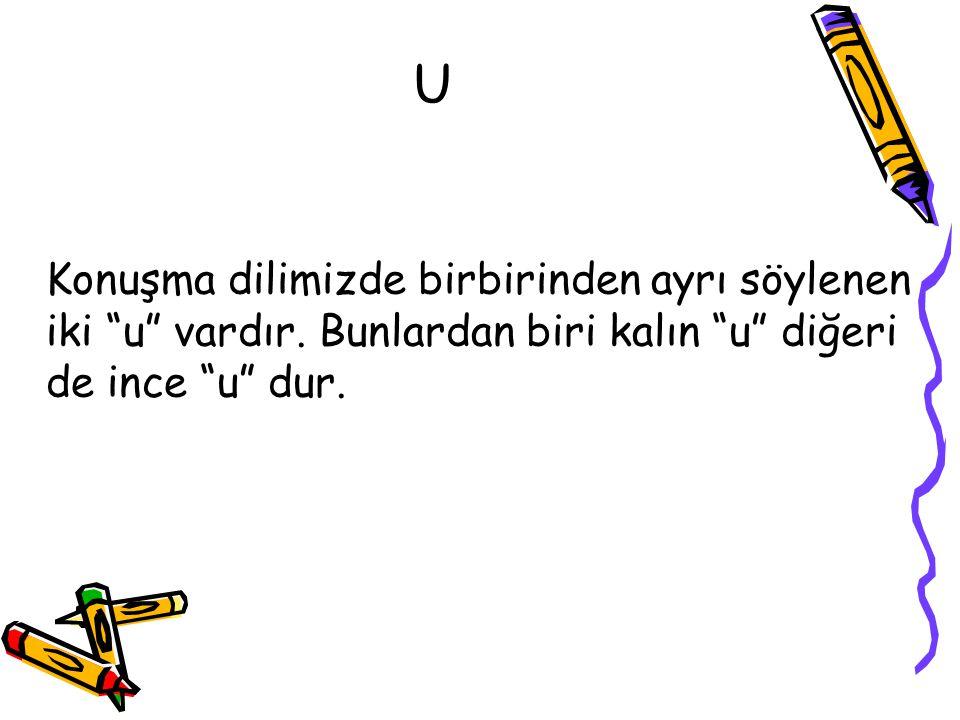 """U Konuşma dilimizde birbirinden ayrı söylenen iki """"u"""" vardır. Bunlardan biri kalın """"u"""" diğeri de ince """"u"""" dur."""