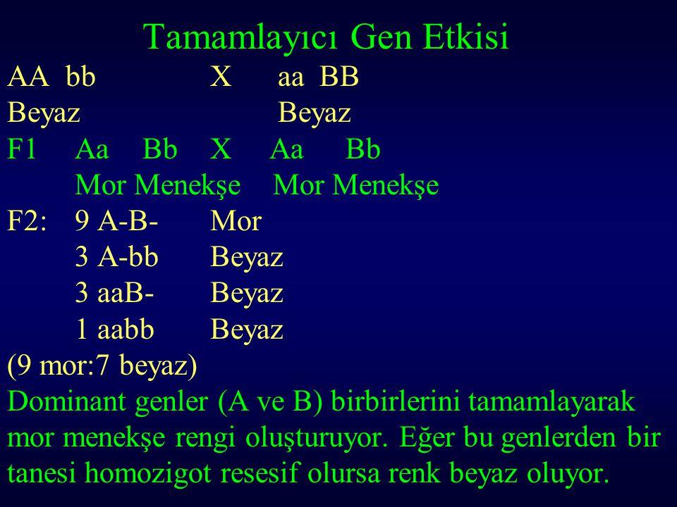 Tamamlayıcı Gen Etkisi AA bb X aa BB BeyazBeyaz F1AaBb X AaBb Mor Menekşe Mor Menekşe F2: 9 A-B-Mor 3 A-bbBeyaz 3 aaB-Beyaz 1 aabbBeyaz (9 mor:7 beyaz
