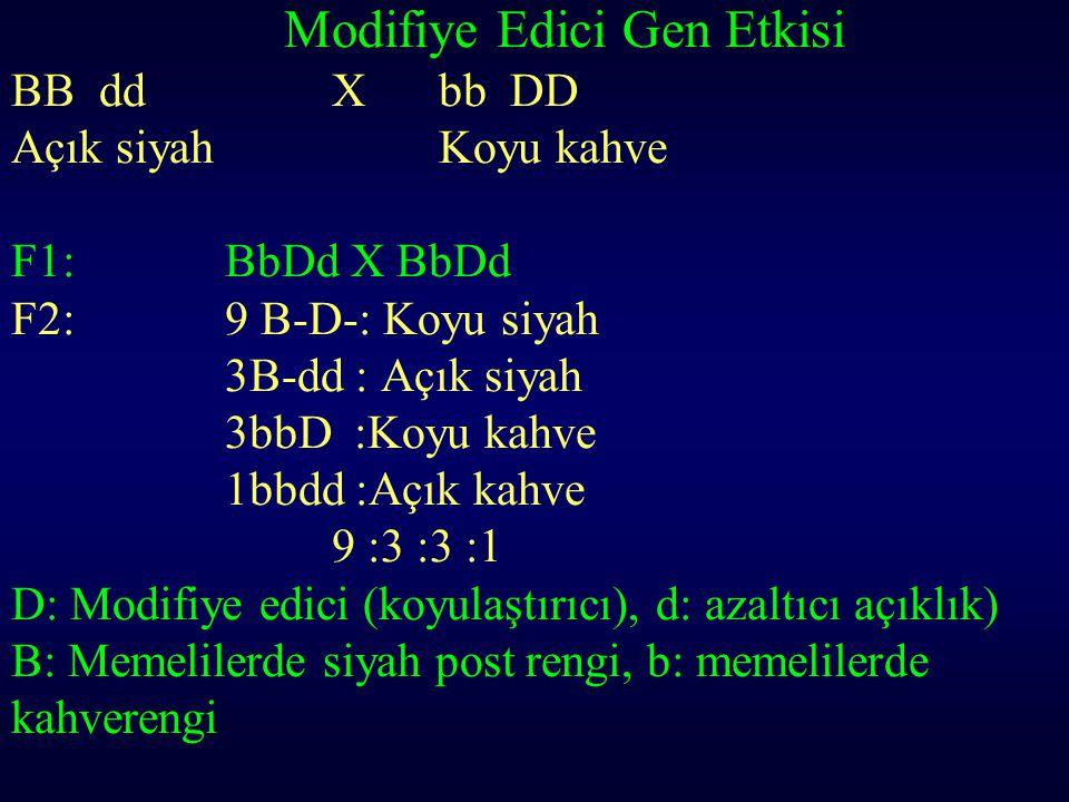 Modifiye Edici Gen Etkisi BB ddXbb DD Açık siyahKoyu kahve F1: BbDd X BbDd F2:9 B-D-: Koyu siyah 3B-dd : Açık siyah 3bbD :Koyu kahve 1bbdd :Açık kahve