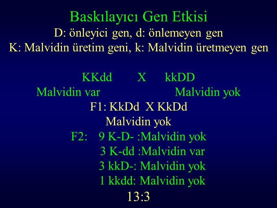 Baskılayıcı Gen Etkisi D: önleyici gen, d: önlemeyen gen K: Malvidin üretim geni, k: Malvidin üretmeyen gen KKddXkkDD Malvidin varMalvidin yok F1: KkD