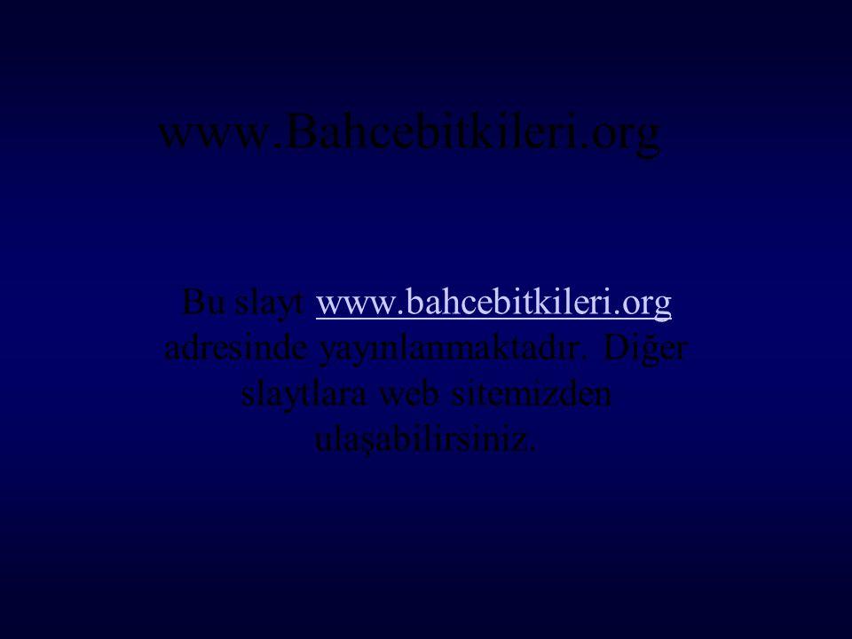 www.Bahcebitkileri.org Bu slayt www.bahcebitkileri.org adresinde yayınlanmaktadır. Diğer slaytlara web sitemizden ulaşabilirsiniz.www.bahcebitkileri.o