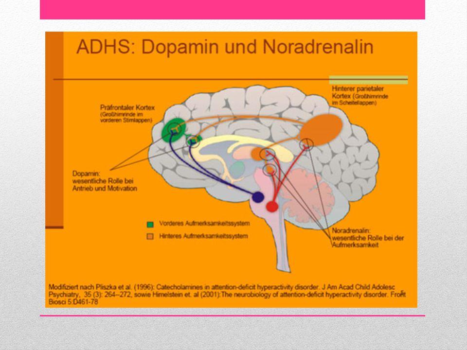BAŞARILI ÖĞRENCİ • Öğrenci, az miktarda da olsa başaramayacağından korkmalı ve noradrenalin salgılamalı ki dikkatinde artışlar olabilsin.