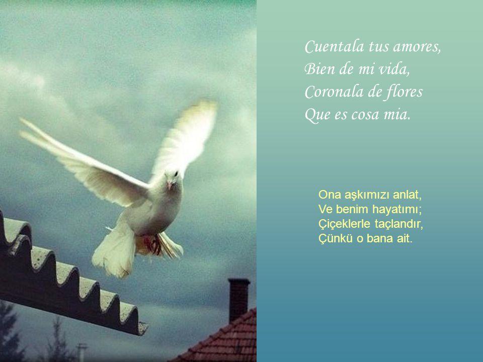 Si a tu ventana llega Una Paloma Tratala con corino, Que es mi persona. Pencerene konarsa Bir güvercin Ona sevgiyle bak Çünkü o benim güvercinim