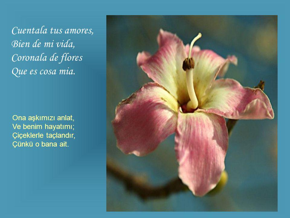 Cuentala tus amores, Bien de mi vida, Coronala de flores Que es cosa mia.
