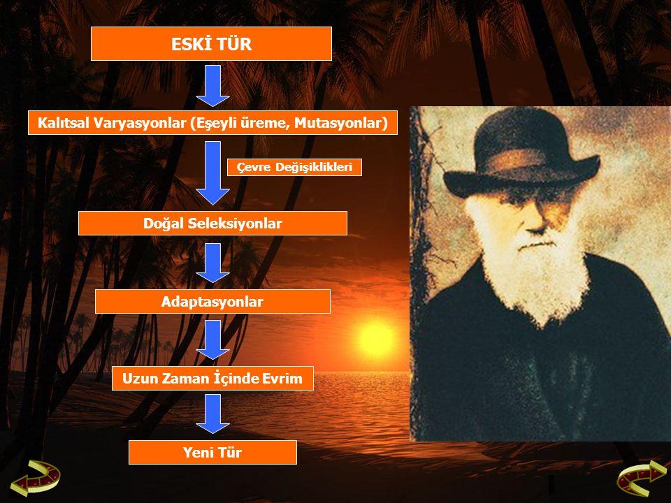 ESKİ TÜR Kalıtsal Varyasyonlar (Eşeyli üreme, Mutasyonlar) Doğal Seleksiyonlar Adaptasyonlar Uzun Zaman İçinde Evrim Yeni Tür Çevre Değişiklikleri