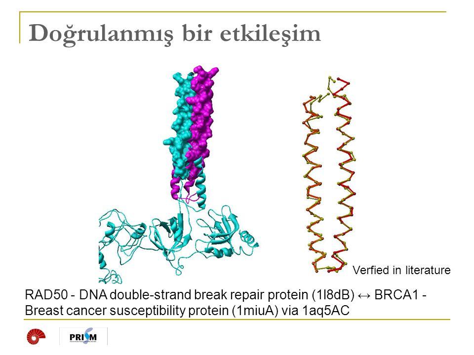 Doğrulanmış bir etkileşim RAD50 - DNA double-strand break repair protein (1l8dB) ↔ BRCA1 - Breast cancer susceptibility protein (1miuA) via 1aq5AC Ver