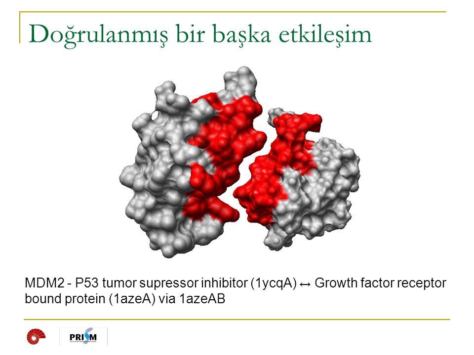 MDM2 - P53 tumor supressor inhibitor (1ycqA) ↔ Growth factor receptor bound protein (1azeA) via 1azeAB Doğrulanmış bir başka etkileşim