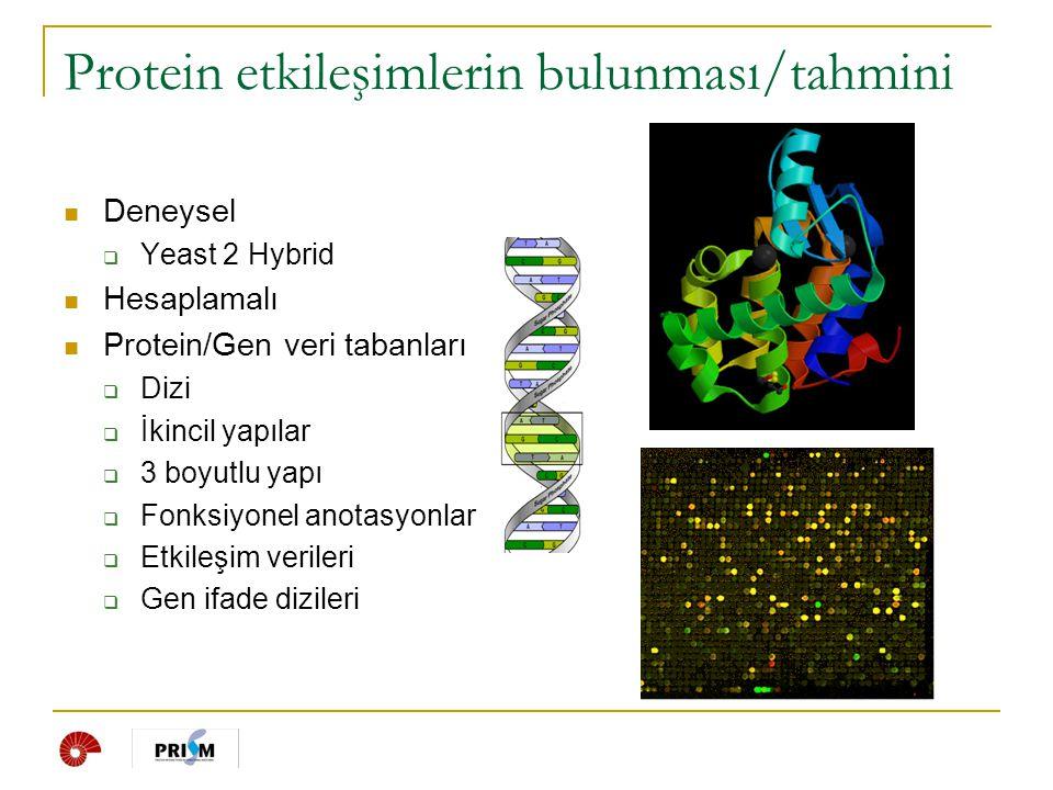  Protein Veri Bankası  http://www.pdb.org http://www.pdb.org  3 boyutlu yapısı bilinen proteinler  Şubat 2007: 40000'den fazla protein yapı biligisi  Hızla artıyor Ayın proteini (Ocak 2007) İmportin : Taşıyıcı protein