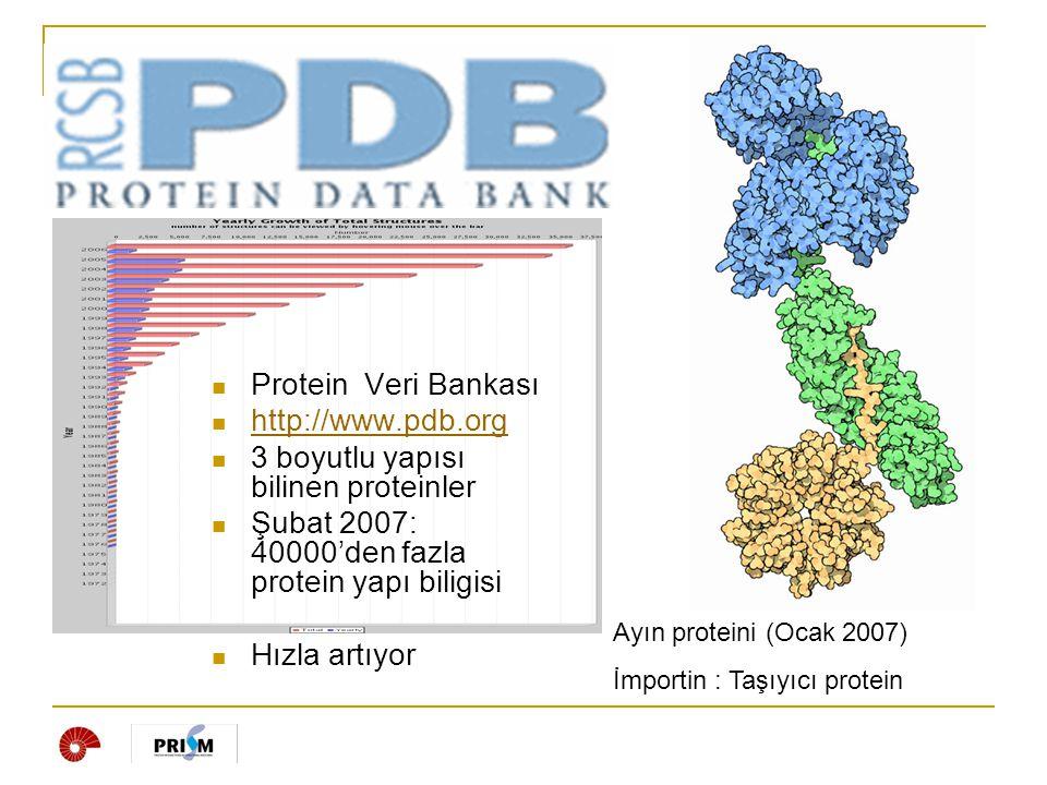 Protein etkileşim arayüzü  Proteinlerin etkileştiği yüzey bölgeleri.