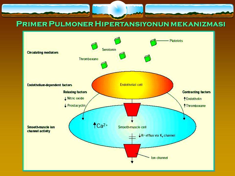 24 Primer Pulmoner Hipertansiyonun mekanizması